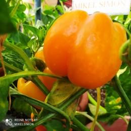 7 POD Primo Orange,10...
