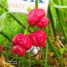 SUPER HOT 10+++ , 6 chiles mas picantes del mundo,60 semillas, pack(15)