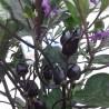 Chiles mixtos en polvo,Trinidad,Jolokia,Habanero,7 POD,Carolina, 10 GR,