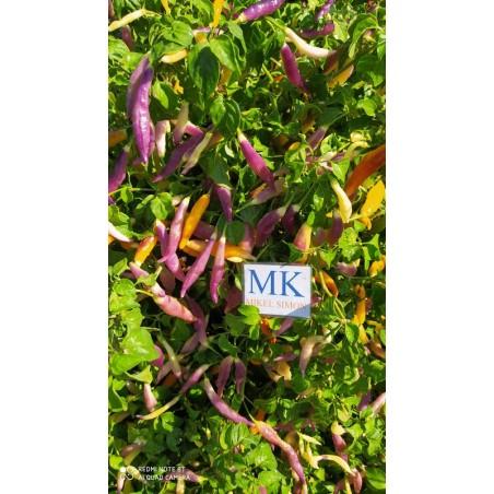 Golden Nugget,10 semillas,seeds,Capsicum annuum,cosecha propia (348)