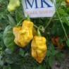 Podzilla Red,Raro,10 semillas,seeds,Capsicum chinense,cosecha propia (102)